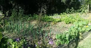 vegetable garden paths design