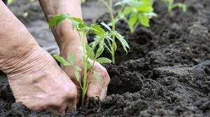 Study: Organic Farming Is More Profitable Than Conventional ...