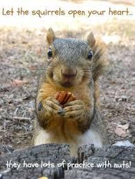 40 Nut House Ideas Nut House Squirrel Funny Squirrel