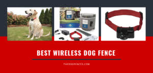 Best Wireless Underground Electric Invisible Dog Fence