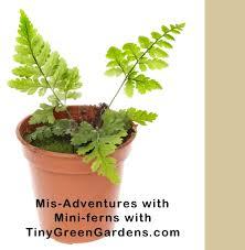 miniature fern experiment tiny