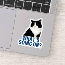 Cat Laptop Stickers Skins Zazzle