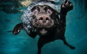 funny dog desktop wallpaper 4oc3ny4