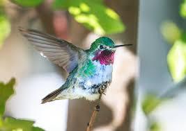 Twitter, le petit oiseau qui fait encore chanter les marques ...