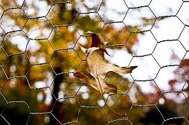 Leaf Chicken Wire Autumn Fall Fence Leaves Environment Plant Natural Outdoor Garden Pikist