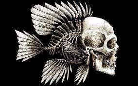 skulls humor artwork charles darwin