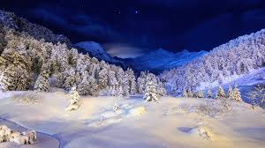 snow trees blue night desktop pc
