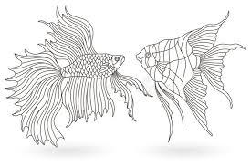 angelfish stock ilrations 1 681