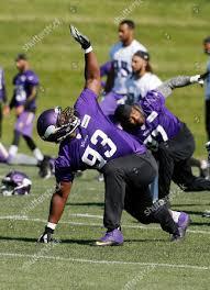 Minnesota Vikings defensive tackle Shamar Stephen goes Editorial Stock  Photo - Stock Image   Shutterstock