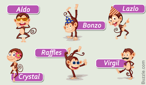 cute and funny pet monkey names you ll
