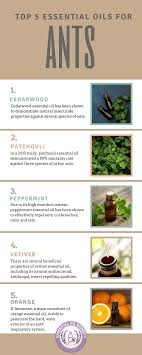 essential oils for ants how to get rid