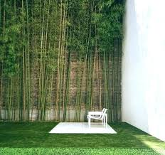 Bamboo Live Privacy Fence Eavic Home Improvement From All The Benefits Of Bamboo Garden Fence Pictures
