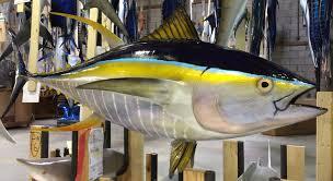 gray taxidermy fish mounts and deep sea