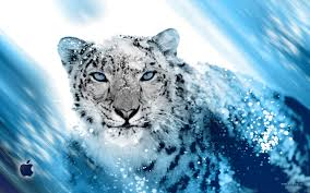 snow leopard wallpaper on wallpapersafari