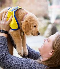Puppy Raiser Faqs Canine Companions