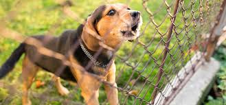 Can Dogs Hear An Electric Fence Wag