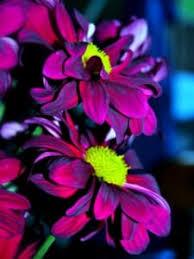3d purple beautiful flowers wallpaper