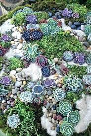 succulent garden ideas likengeng site