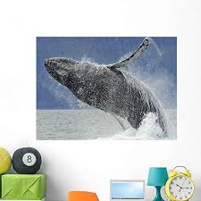 Amazon Com Wallmonkeys Humpback Whale Breaching Near Juneau During Summer In Southeast Alaska Wall Decal Peel And Stick Graphic Wm349727 48 In W X 35 In H Home Kitchen