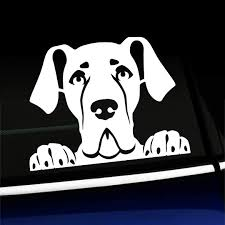 Amazon Com Artistic Reflection Peeking Great Dane Vinyl Decal Choose Color White Automotive