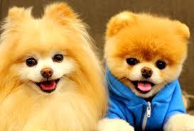 Las 11 razas de perros más tiernas