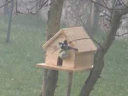 maison de pes oiseaux