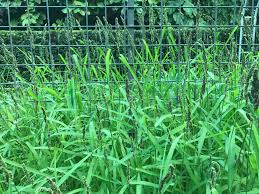 cover crops south florida gardening
