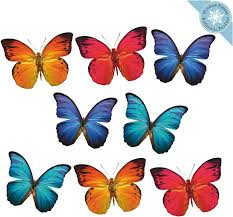 Amazon Com 8 Large Butterfly Window Clings For Glass Windows And Doors Window Decals For Birds Strikes Anti Collision Window Stickers Decor Decorative Butterflies Window Decals For Sliding Glass Doors