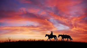 sunset horses wallpaper wallpaper stream