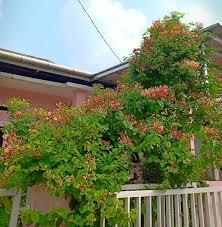 ▷ vj rumahbunga vj rumah bunga dipangkas makin banyak