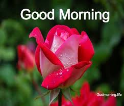 good morning wishes images with flowers
