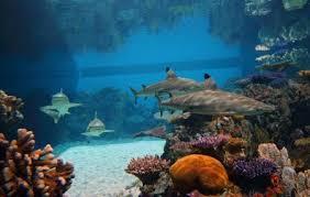 national aquarium baltimore ticket