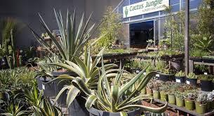 california cactus and succulents