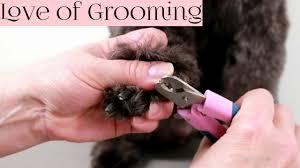 how to clip black dog nails you