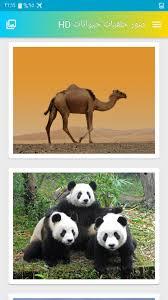 صور خلفيات حيوانات Hd For Android Apk Download