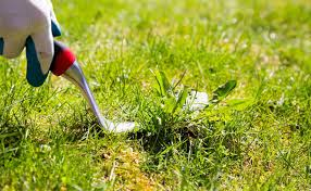 how to get rid of crabgrass the easy way