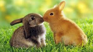 cute bunny rabbit wallpaper hd rabbits