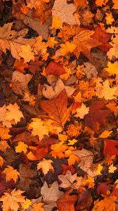 fall leaves wallpaper phone