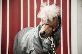 pony turnout rug 160g
