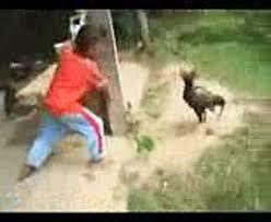 Chết cười khi những chú gà nổi giận. (2) - video dailymotion