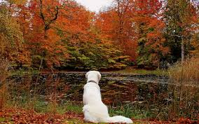 Lake leaves autumn dog forest f wallpaper | 2560x1600 | 166519 | WallpaperUP