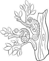 Kleurplaten Wilde Dieren Twee Kleine Schattige Kameleon Clipart