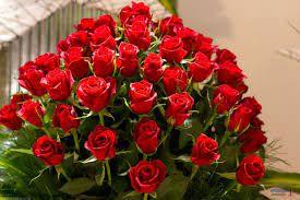 صور الورود الجميله
