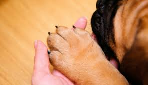 stop your dogs nail from bleeding