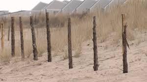 Dnrec Installing Alternative Dune Fencing On Lewes Beach Wboc Tv 16 Delmarvas News Leader Fox 21