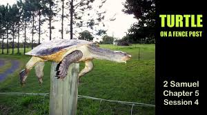 04 Turtle On A Fence Post Youtube