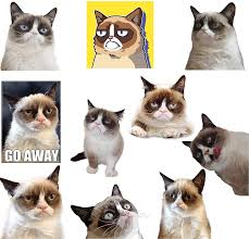 Gtotd 10 Pcs Grumpy Cat Meme Stickers Funny Decal Bumper Stickers Vinyl Decal Sticker Pack To No Amazon Co Uk Sports Outdoors