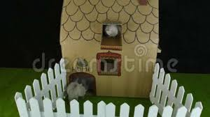 Cats Cardboard House With Balcony Outdoor View Stock Video Video Of Animal Climbs 110012821