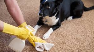 dog smell on the carpet how to get