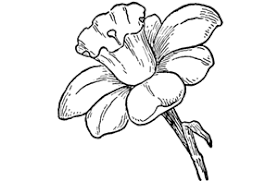 how to draw flowers drawing tutorials